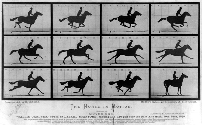 Sallie Gardner at a Gallop. The Horse in Motion. Series of photographs by Eadweard Muybridge.