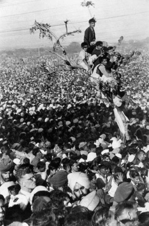 Funeral of Mahatma Gandhi. People perching atop a tree.