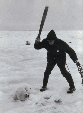 A hunter killing a seal pup during Canadian seal hunt. Photograph by Duncan Cameron.