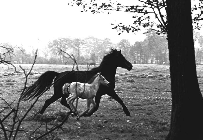 "Mare with Foal. This photograph is called ""The Soul of a Horse"". Photographer is Peter Thomann."