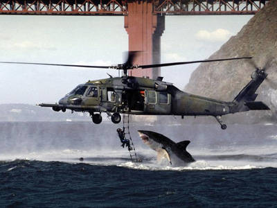 Shark leaping out to catch a guy hanging to a helicopter. It is a fake photograph. Notice the structure of Golden Gate bridge in the background.